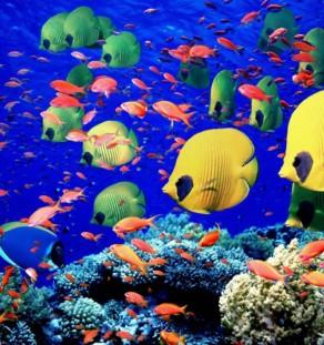 Fiske & Koral sendinger